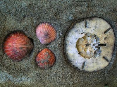 Embedded Shells